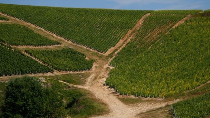 champagne-guy-lamoureux-a-riceys-une-commune-viticole-etend-sur-866-hectares-de-vignoble
