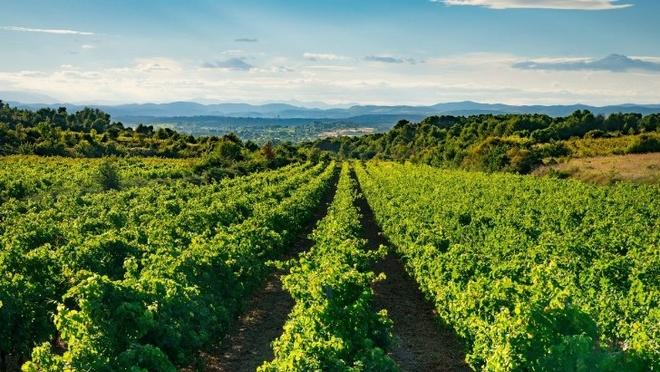 randonnee-dans-vignes-entre-montagnac-et-pomerols
