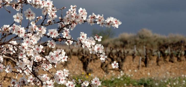 vin-du-roussillon-un-riche-patrimoine-naturel-et-viticole