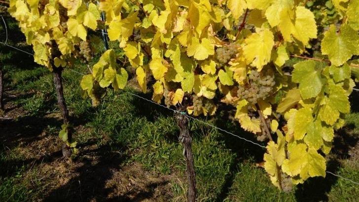 domaine-vincent-goesel-travaille-cepages-alsaciens-pour-elaborer-differentes-types-de-vins