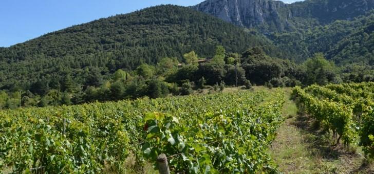 domaine-grain-d-orient-coteaux-de-chardonnay
