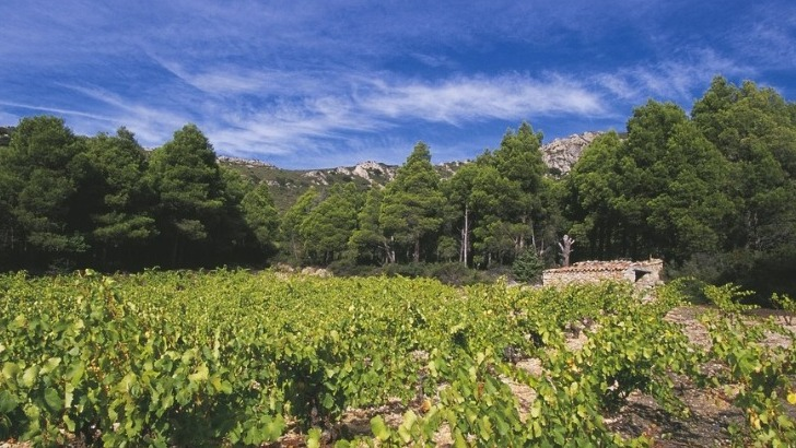 vins-alcools-domaine-mont-tauch-a-tuchan