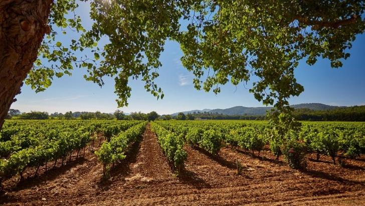 domaine-du-loou-respecter-environnement-pour-preserver-sante-du-consommateur-et-cote-naturel-du-vin