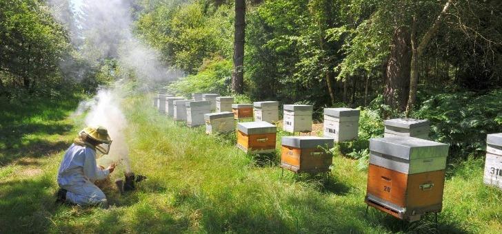 avant-visite-des-ruches-preparation-de-enfumoir