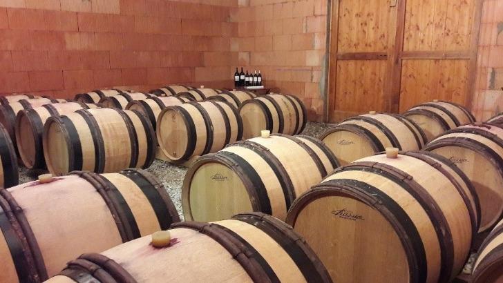 domaine-maillols-des-vins-au-bon-potentiel-de-garde-aux-aromes-de-fruits-murs