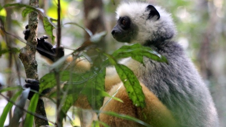 mahayexpedition-a-antananarivo-madagascar-rencontrer-des-especes-endemiques