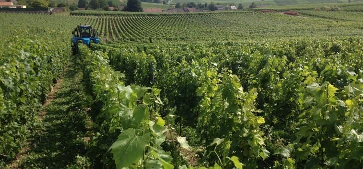 parcelles-enherbee-demarche-viticulture-durable