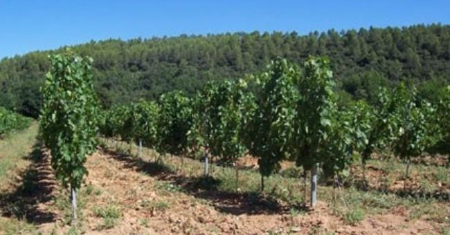 domaine-grand-vigne-a-brignoles