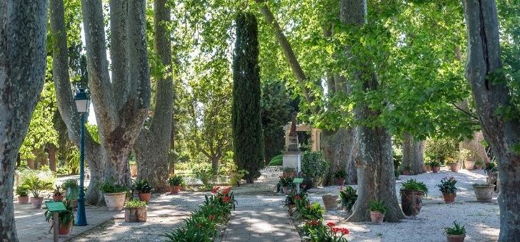 chateau-de-aumerade-a-pierrefeu-du-var-15-majestueux-platanes-ombragent-parc-de-propriete