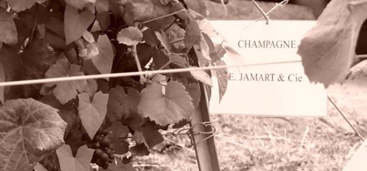 quatre-generations-de-vignerons-animees