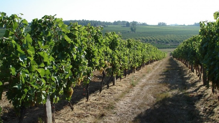 vins-alcools-domaine-chateau-au-grand-paris-a-cazaugitat
