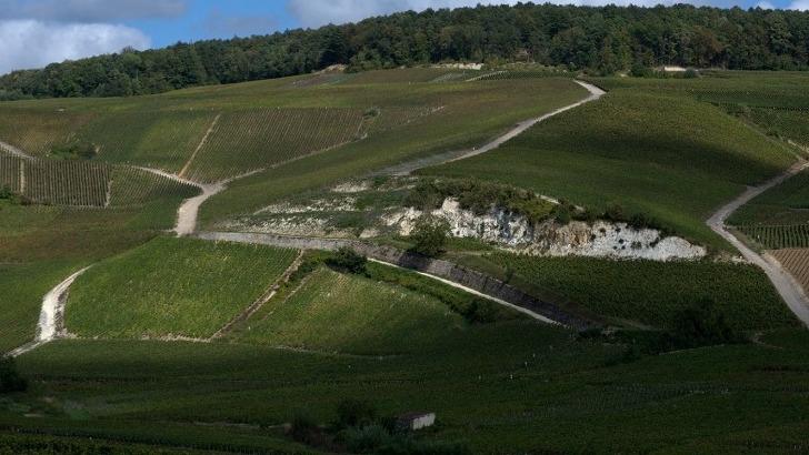 champagne-un-vignoble-reparti-dans-4-grandes-regions-de-production-montagne-de-reims-vallee-de-marne-cote-des-blancs-et-cote-des-bar