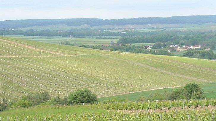 champagne-moyat-jaury-guilbaud-propose-de-profiter-du-calme-du-village-et-de-visiter-vignoble-a-travers-son-gite-tout-empreignant-de-elaboration-du-champagne