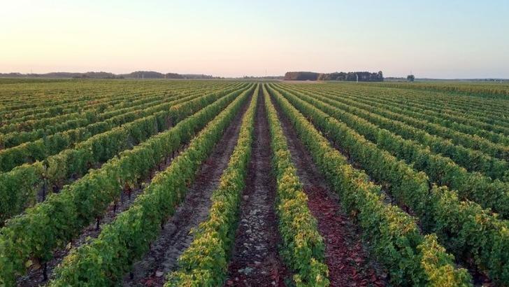 domaine-de-commanderie-a-cerbois-10-ha-de-vignes-dedies-aux-appellations-quincy-et-reuilly