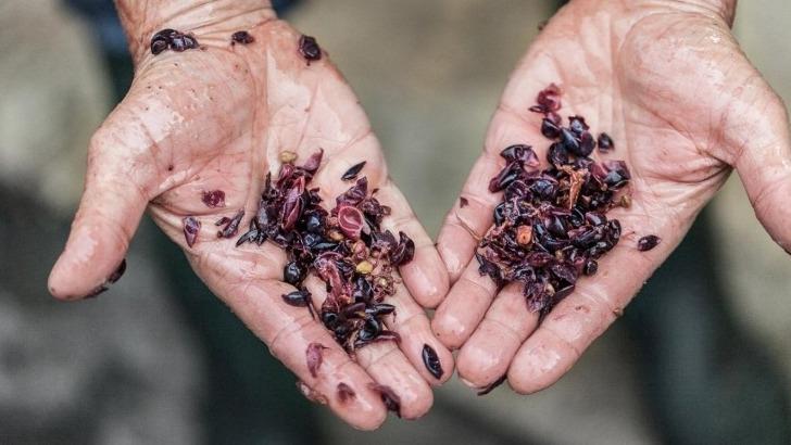 champagne-cooperative-des-anciens-de-la-viticulture-a-avize