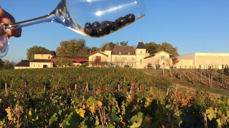 chateau-moncets-chateau-de-chambrun-au-coeur-de-appellation-lalande-de-pomerol