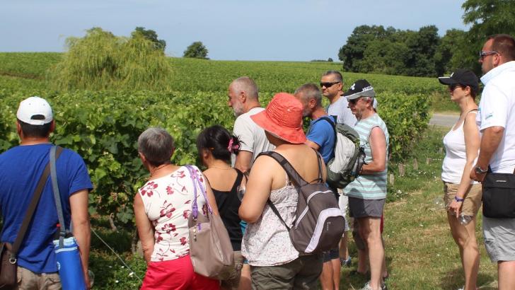 chateau-tour-castillon-propose-une-visite-commentee-pour-faire-decouvrir-vignoble-histoire-du-domaine-et-metier-de-viticulteur