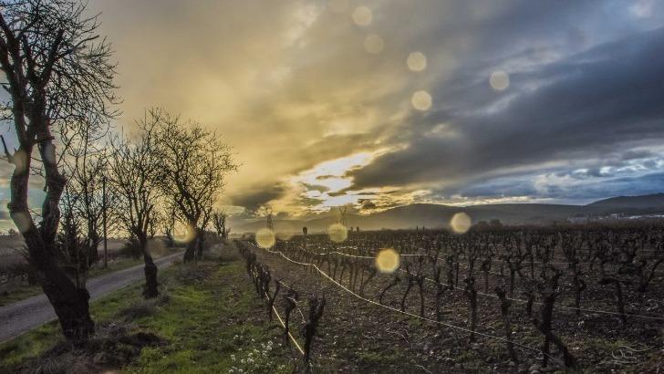 domaine-cantalauze-quietude-et-beaute-du-lieu-sauront-seduire-autant-ses-precieux-elixirs-issus-des-raisins-plus-nobles
