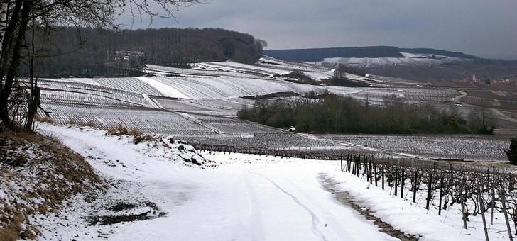 vignes-au-repos-hiver