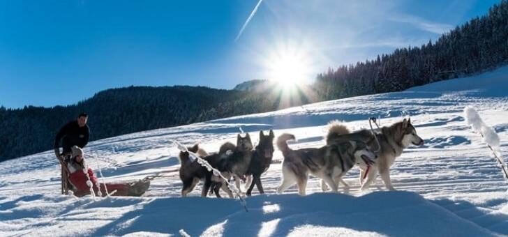 balade-avec-des-chiens-de-traineaux