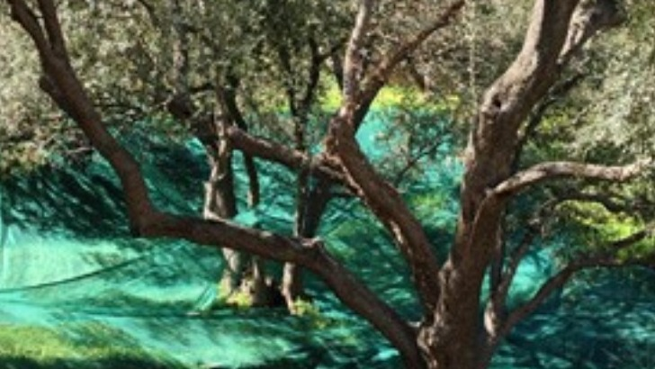 vins-alcools-domaine-domaine-terra-di-catoni-a-cagnano