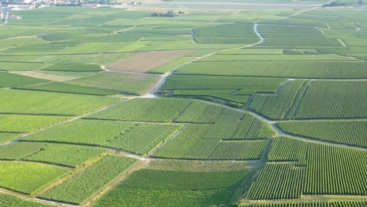 champagne-boutillez-marchand-a-villers-marmery-6-40-hectares-de-vignes-dedies-majoritairement-au-chardonnay