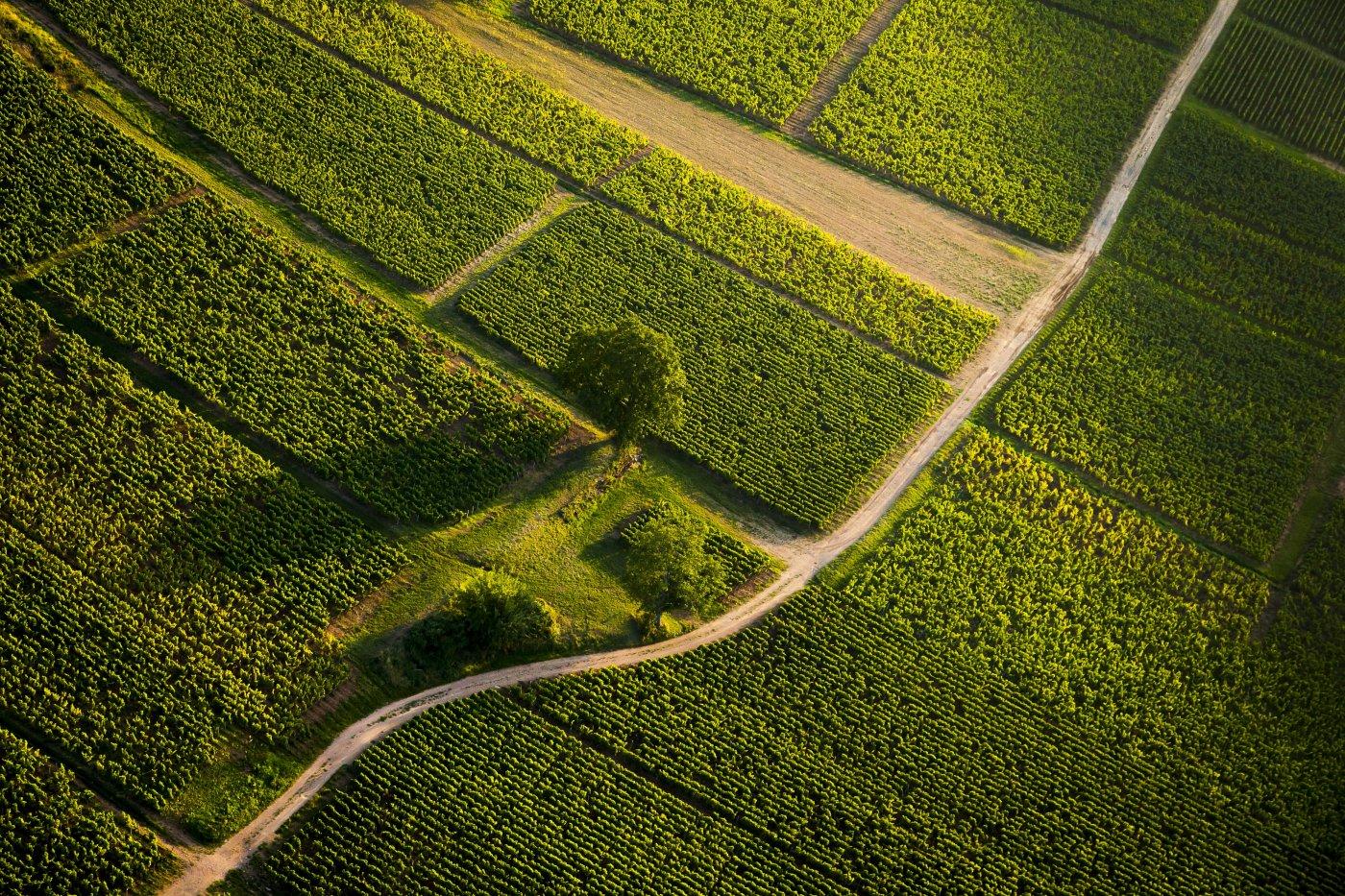 destination-saone-et-loire-dans-un-cadre-authentique-vignobles-offrent-majeste-aux-touristes