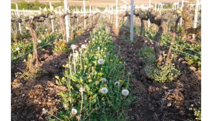 champagne-vincent-bliard-un-domaine-revendique-culture-biologique-et-apporte-un-soin-particulier-au-travail-du-sol
