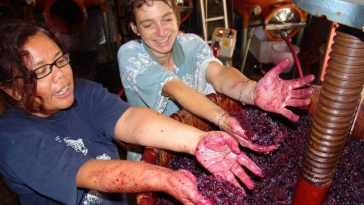 clos-du-marbrier-des-cepages-inedits-et-presque-oublies-comme-aramont-conferent-un-caractere-unique-aux-vins-du-domaine