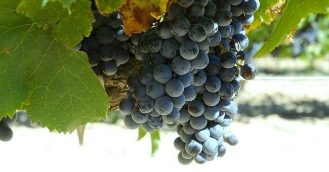 vins-alcools-domaine-chateau-virant-a-lancon-provence