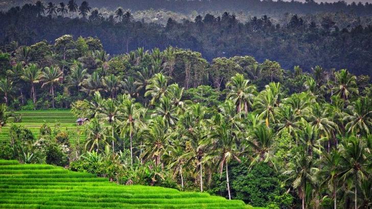 indonesie-bali-des-rizieres-terrasses-a-proximite-de-belimbing