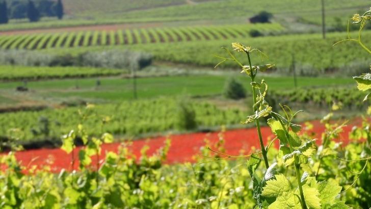 joli-vignoble-d-esperou-au-coeur-des-corbieres