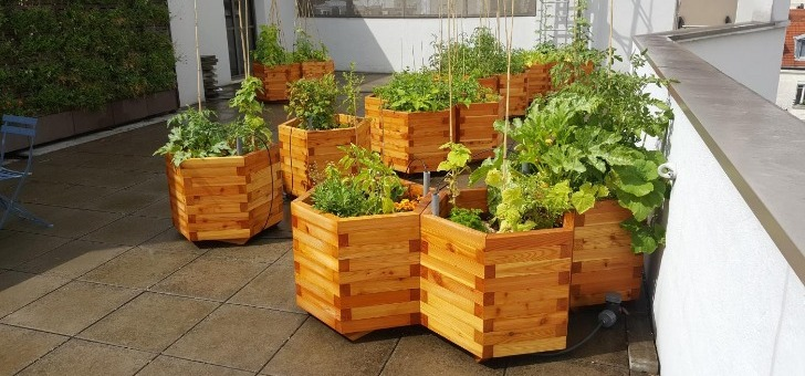 cueillette-urbaine-peu-importe-espace-disponible-est-possible-de-creer-votre-ferme-urbaine