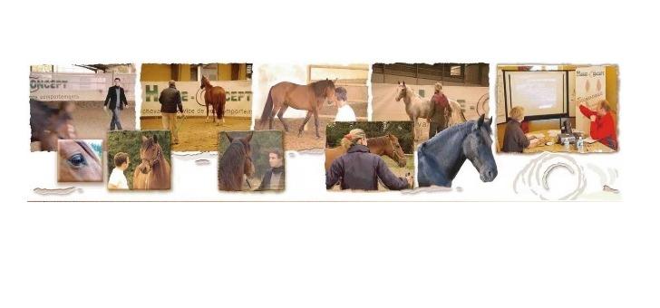 horse-concept-avec-expertise-d-une-equipe-pluridisciplinaire-un-docteur-ethologie-de-universite-de-strasbourg-et-du-cnrs