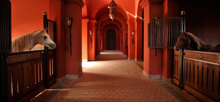 haras-de-pur-sang-au-selman-hotel-de-marrakech