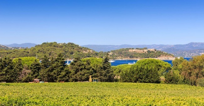 vin-vignoble-de-la-provence-a