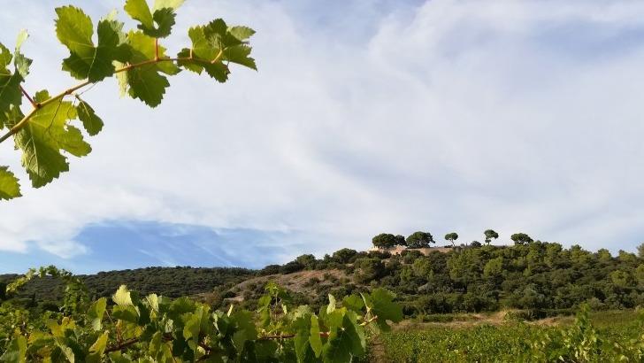 vigne-de-aigueliere-aux-pieds-des-terrasses-du-larzac
