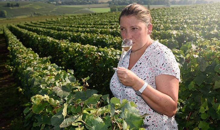 de-vigne-au-verre-loriot-champagne