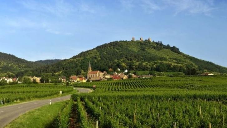 vins-alcools-domaine-vins-alphonse-kuentz-a-husseren-les-chateaux