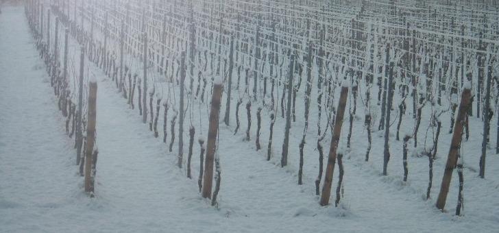 climat-alsacien-permet-une-maturation-lente-et-prolongee-des-raisins-favorise-developpement-d-aromes-complexes-et-preservation-d-une-acidite-mure-procurant-de-fraicheur-aux-vins