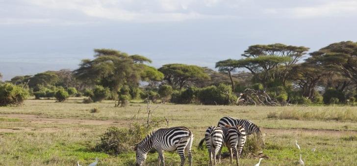 e-visums-une-reponse-moins-de-24h-pour-demande-de-visa-pour-kenya