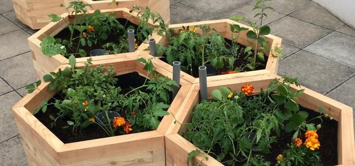 cueillette-urbaine-prenez-temps-de-voir-pousser-vos-fruits-et-legumes