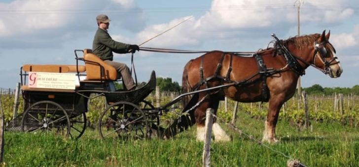ballade-caleche-a-cheval-dans-vignoble-du-domaine-giraudiere-des-vins-authentique-aoc-aop-saumur-champigny