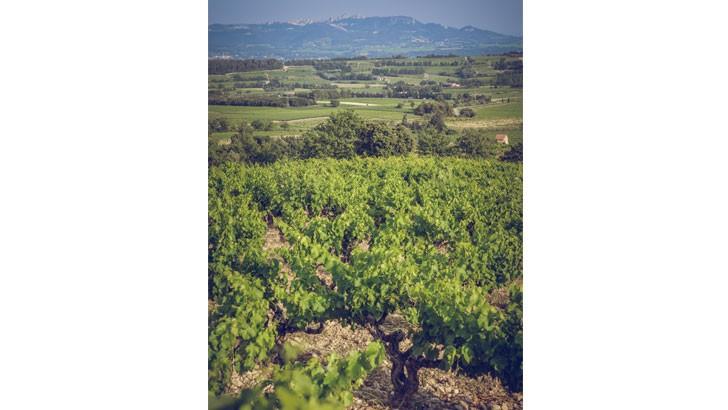 domaine-alary-29ha-du-domaine-composes-de-sols-diversifies-sont-menes-agriculture-biologique