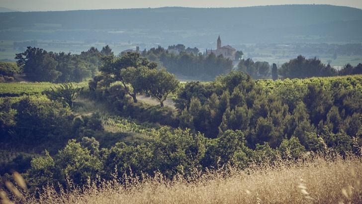 domaine-alary-a-des-vignes-de-35-ans-d-age-reputees-pour-faire-de-grands-vins