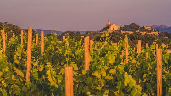 domaine-alary-sous-sol-compose-d-argile-blanche-et-rouge-allie-au-sol-de-garrigues-permet-d-elaborer-des-vins-elegants-et-frais