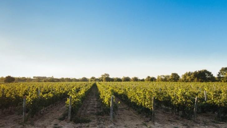 vins-alcools-domaine-domaine-de-la-baume-a-servian