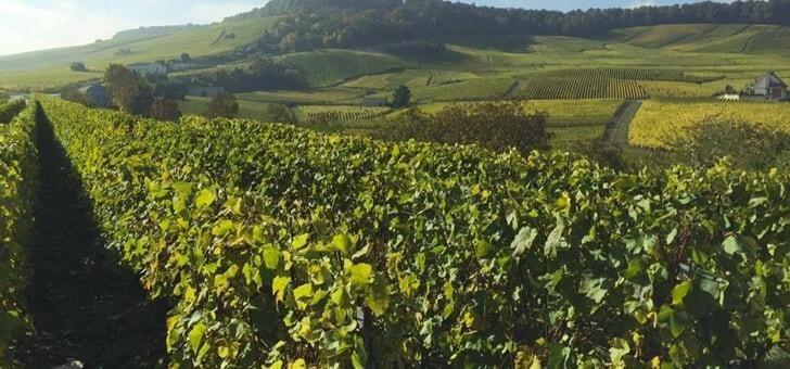 un-beau-vignoble-situe-dans-village-d-oger