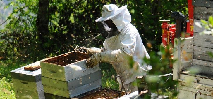 recolte-du-miel