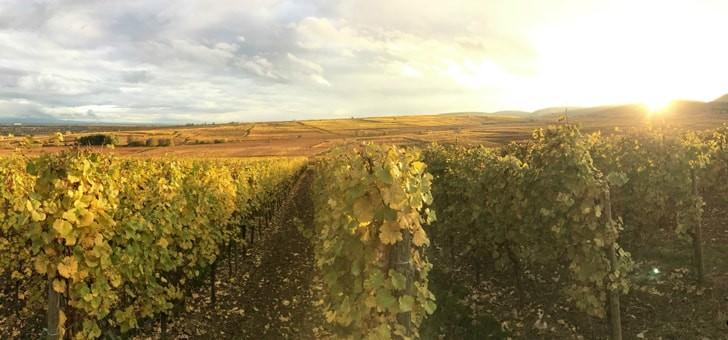vignobles-vins